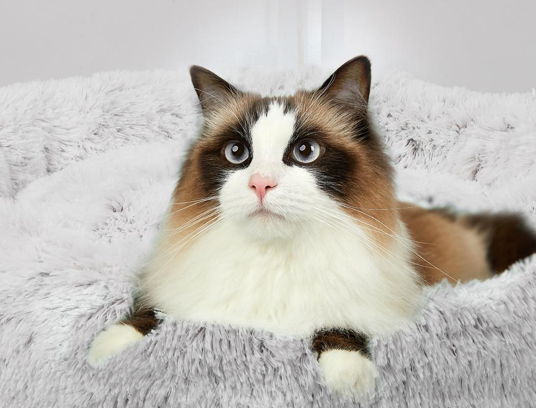 thumbnail 66 - PaWz Jumbo Pet Bed Cat Dog Donut Nest Calming Plush Kennel Washable Sleeping