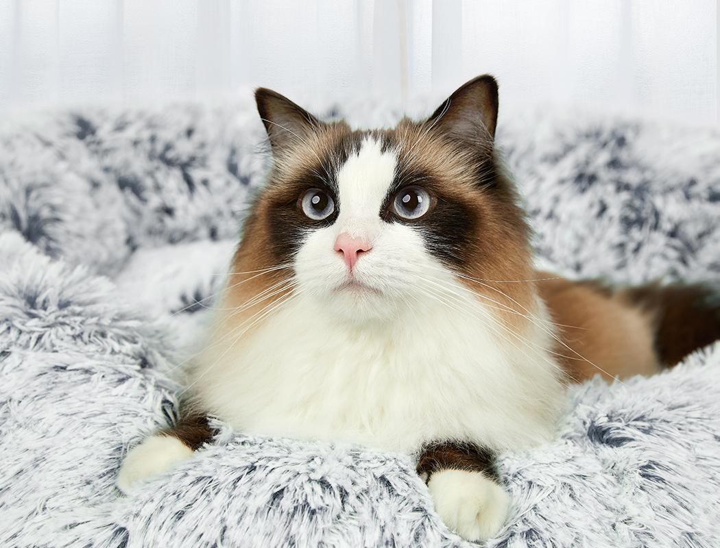 thumbnail 22 - PaWz Jumbo Pet Bed Cat Dog Donut Nest Calming Plush Kennel Washable Sleeping