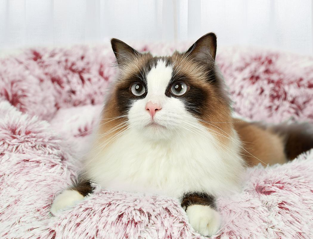thumbnail 44 - PaWz Jumbo Pet Bed Cat Dog Donut Nest Calming Plush Kennel Washable Sleeping