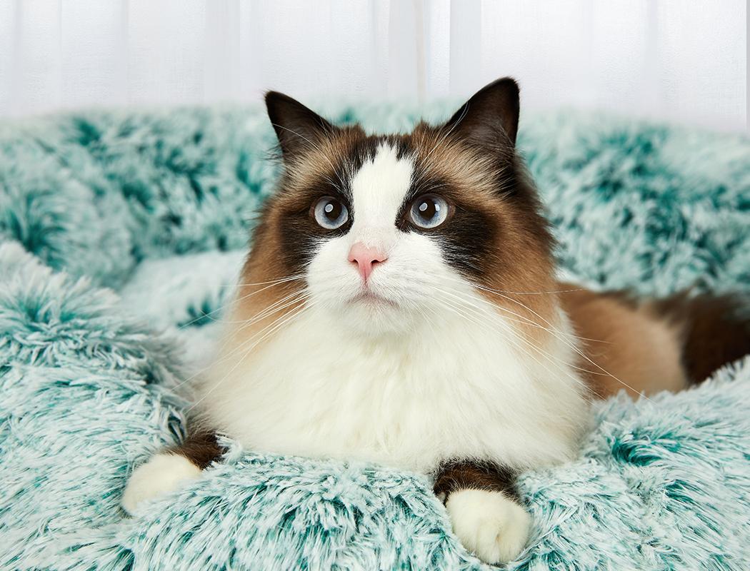 thumbnail 55 - PaWz Jumbo Pet Bed Cat Dog Donut Nest Calming Plush Kennel Washable Sleeping
